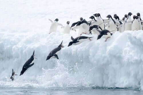 A maratona dos pinguins de Fiordland