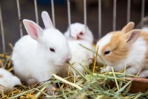 Quais são os vegetais que os coelhos podem comer?