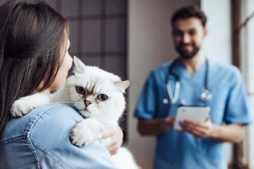Gato indo ao quiropraxista
