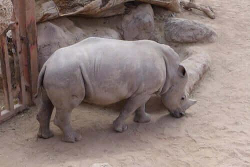 Todos os animais correm o mesmo risco de extinção?