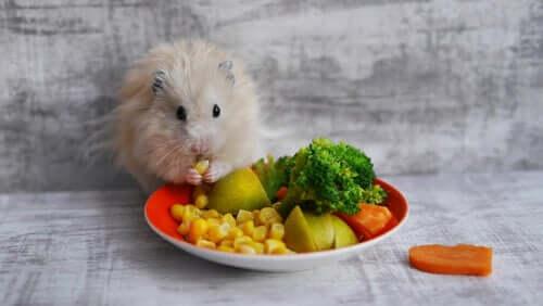 Quais são as melhores guloseimas para roedores?