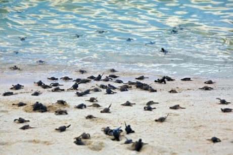 Principais características das tartarugas marinhas