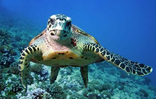 Características das tartarugas marinhas