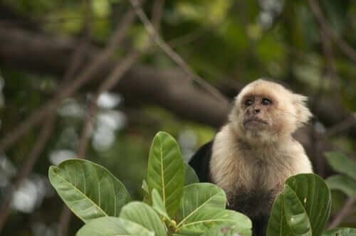 Práticas de treino de macacos terapêuticos