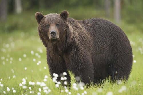 Onde ver animais selvagens na Espanha