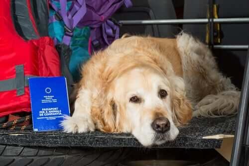 Documentação legal que todo dono de animais deve ter