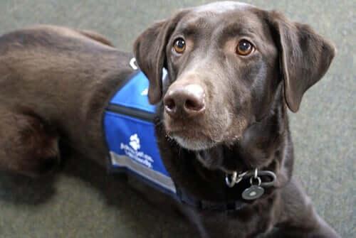Heróis caninos que salvam vidas
