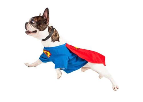 Descubra 6 casos de heróis caninos