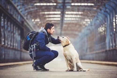 Cão com seu dono em estação