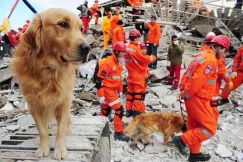 Heróis caninos em operações de resgate
