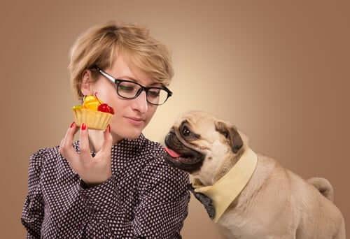 Fornecer alimentação adequada aos cães