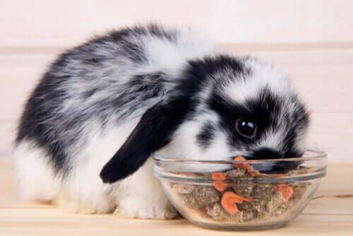 Dieta de um coelho anão adulto