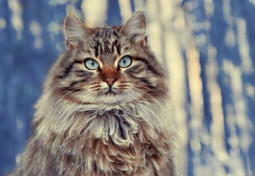Gatos de pelo longo