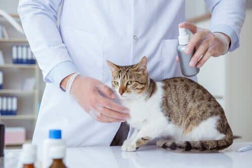 Sprays antiparasitários para gatos