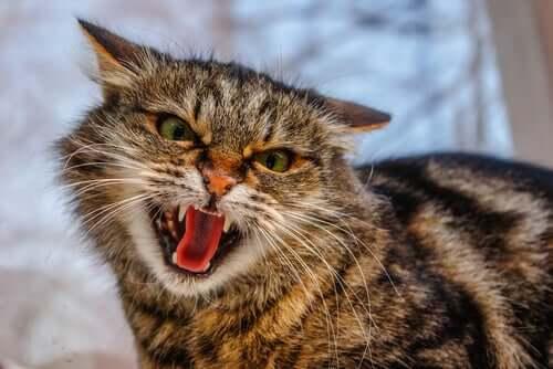 A classificação do comportamento agressivo