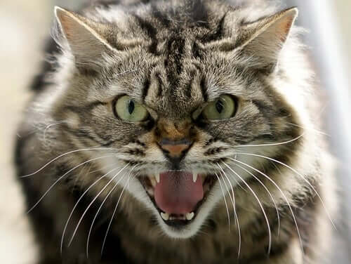 Os diferentes tipos de agressividade em gatos