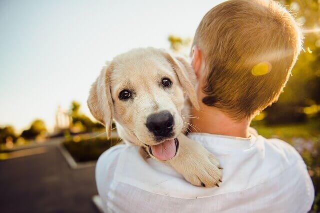 Os 5 animais de estimação mais carinhosos
