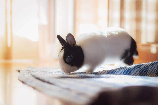 Os coelhos são animais sociáveis