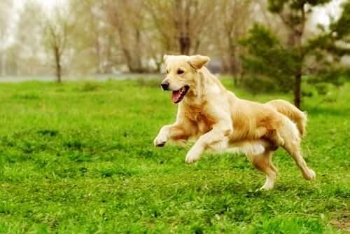 Atividades físicas para animais de estimação