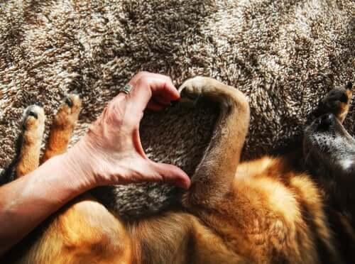 Ter um cachorro melhora a saúde cardiovascular