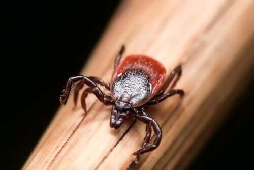 Doença de Lyme