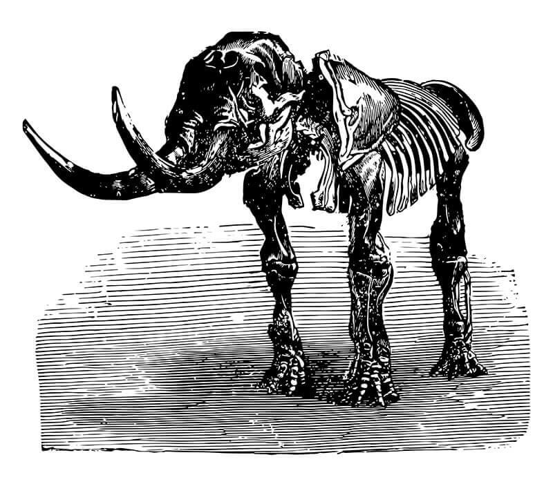 História evolutiva dos mastodontes extintos