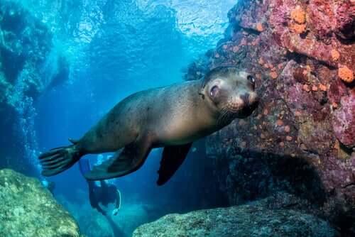 Os melhores nadadores do reino animal
