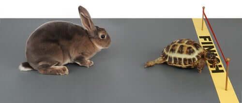 A história da lebre e da tartaruga
