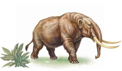 Conheça a história dos mastodontes extintos