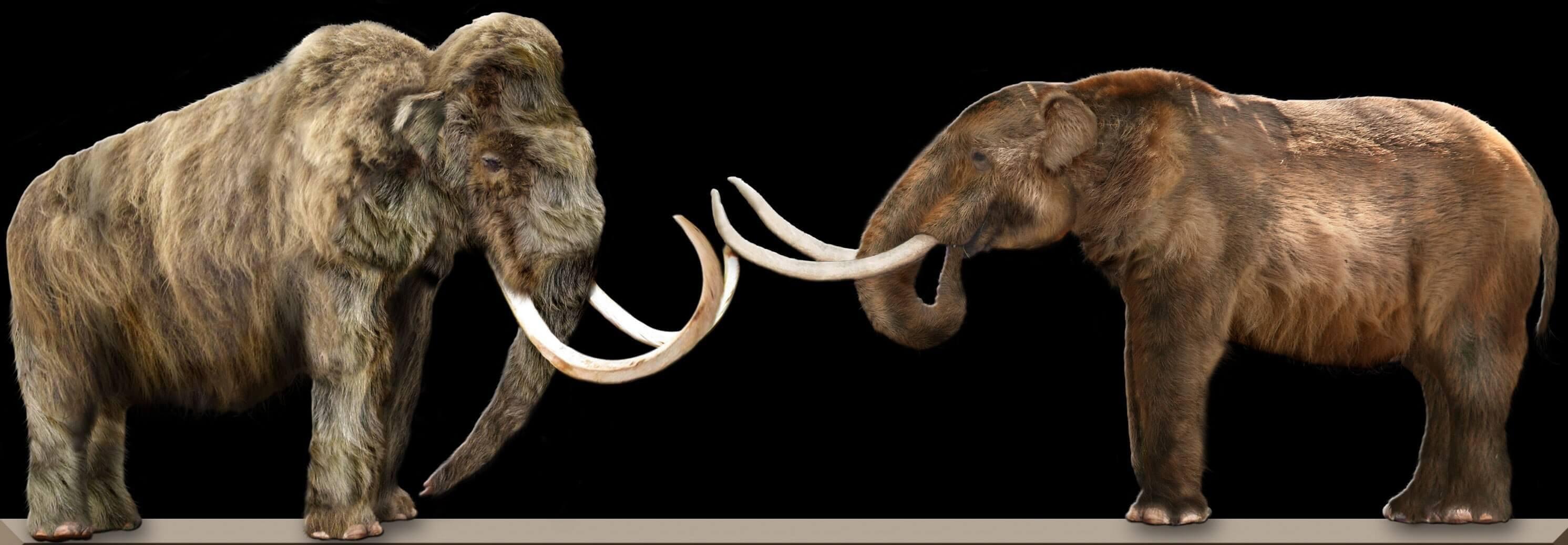 Mastodontes extintos
