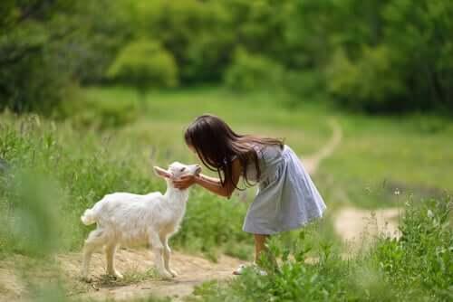 4 coisas que você deve saber para cuidar de cabras