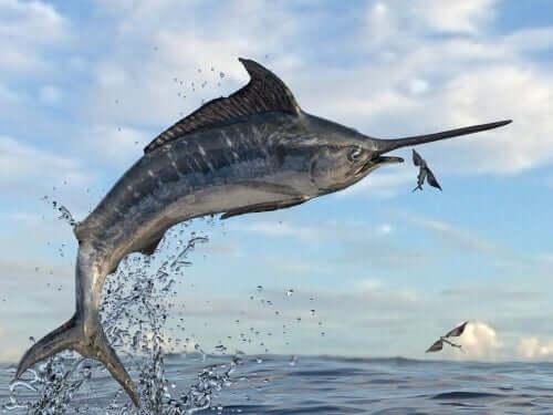 Peixe-voador picudo