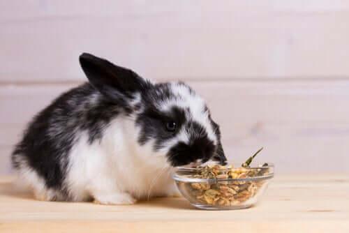 Alimentação dos coelhos de estimação