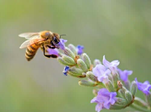 7 curiosidades sobre as abelhas