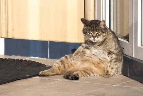 As atividades dos gatos durante o dia