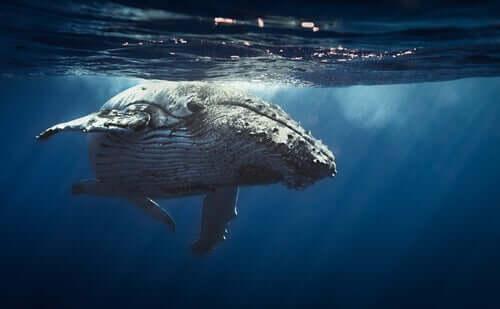 Como a baleia dorme?