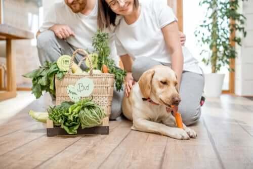 Cachorro vegano com seus donos