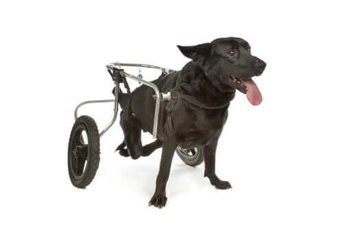 Cadeira de rodas para cães