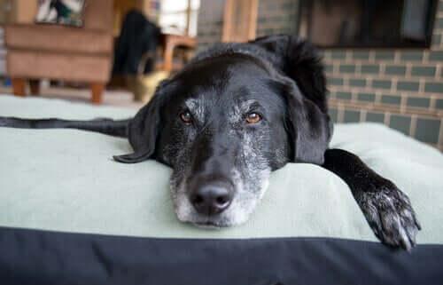 Cachorro relaxado