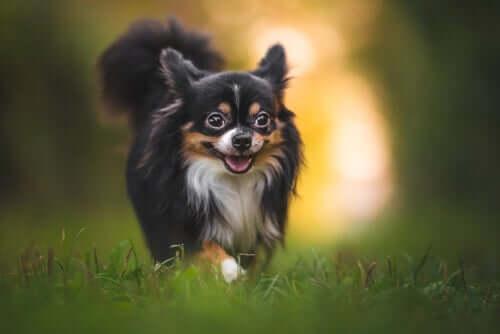 Dicas para proteger os cães de picadas de insetos