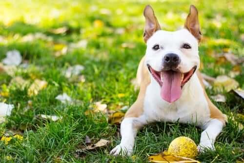 Cão feliz e saudável