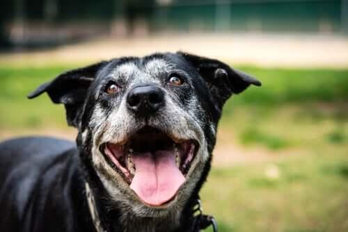 Causas e sintomas das doenças renais em cães