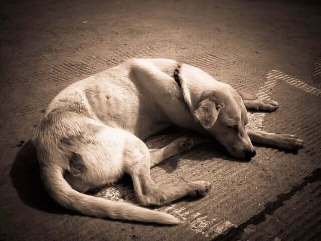 Cachorro magro dormindo