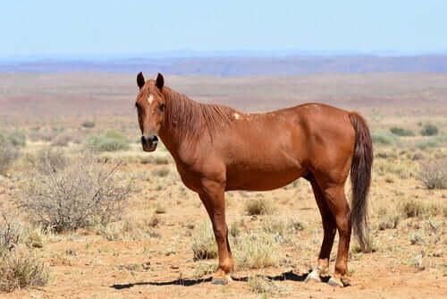 A história dos cavalos na África