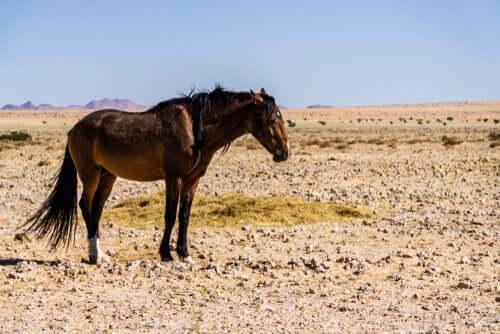 Cavalo na Namíbia