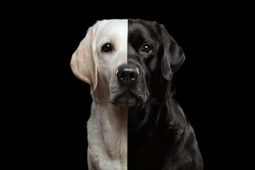 Cães clonados, um negócio legal?
