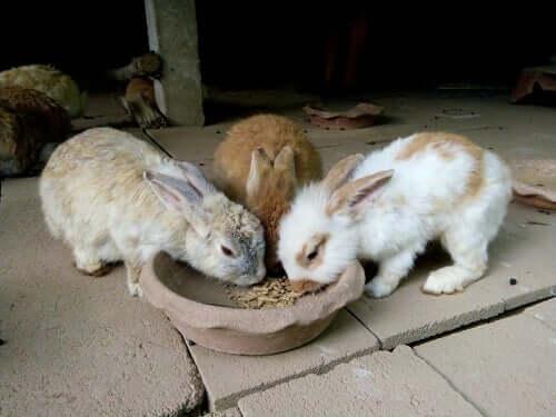 Quanto e quando um coelho deve comer?