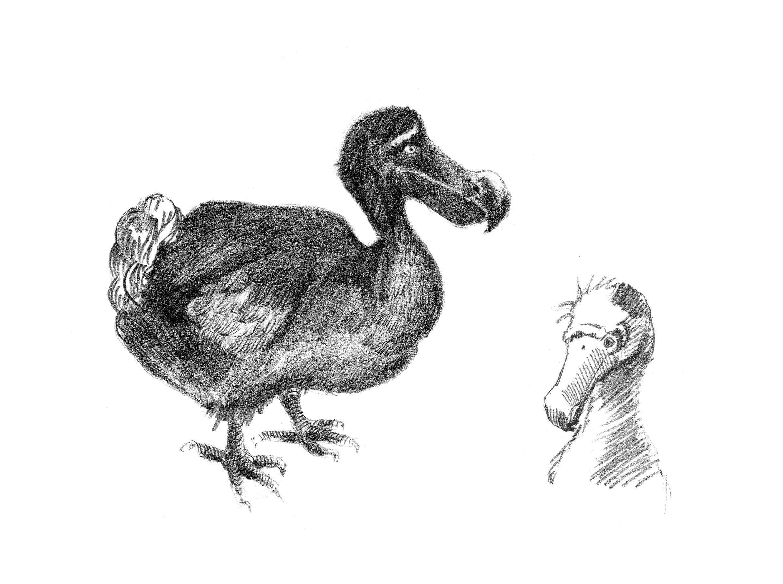 Como e por que o dodô foi extinto?