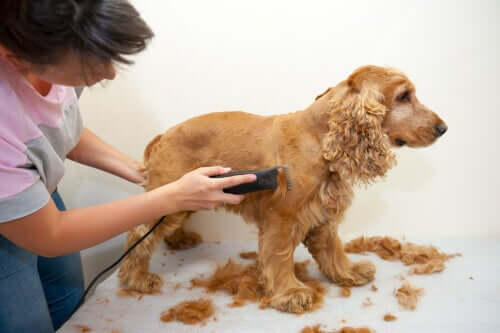 Cachorro sendo tosado