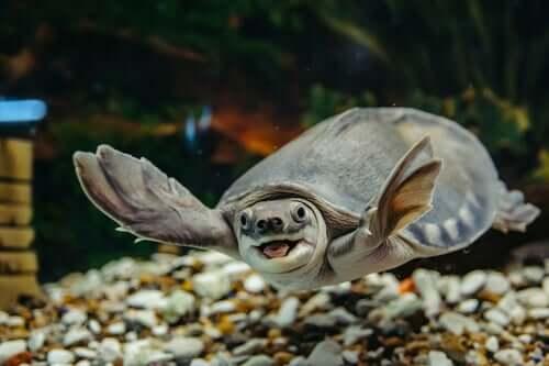 Cuidados exigidos por uma tartaruga aquática